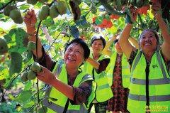 四川华蓥:种植猕猴桃让村民每年增收50万元