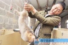 广西南宁张文明六万元起步养竹鼠创业致富