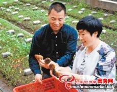 甘肃渭源:羊肚菌蕴藏致富商机成农民致富好项目