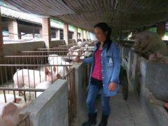江西宜丰农民工胡能秀返乡创业养猪走上致富路