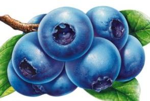 种蓝莓赚钱吗:蓝莓发展前景与种植效益分析